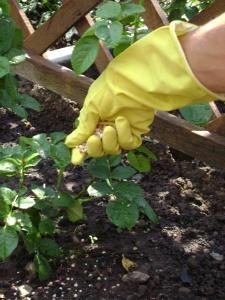 Минральные удобрения очень полезны для растений
