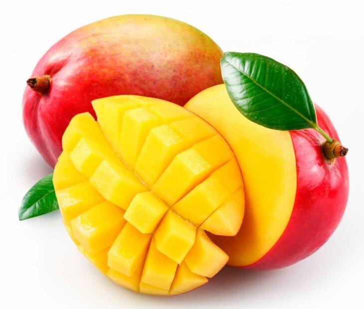 Прививку плодоносящей веточки манго проводят в летние месяцы