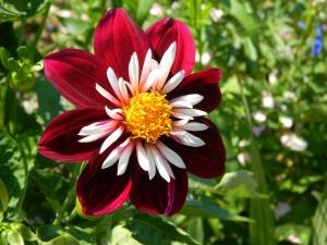 Посадка, полив и уход садовых цветов