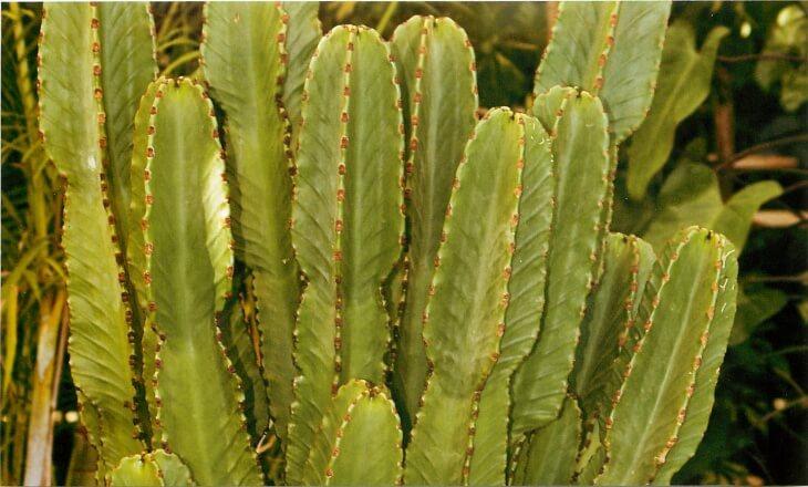 После цветения обычно образуется семечка