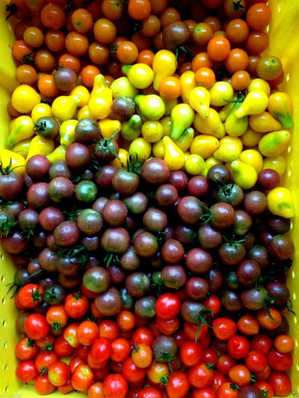 Сорта черных помидоров и их особенности