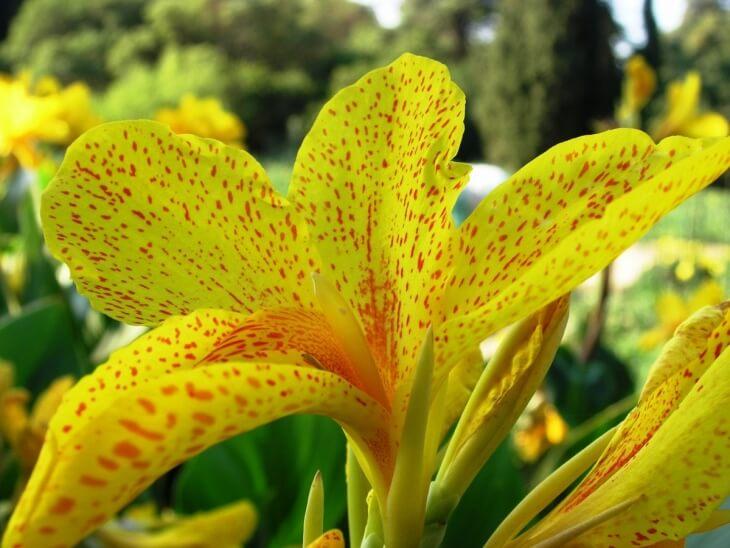 Выкапывайте растение только в сухую погоду!