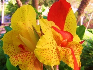 Для хорошего укоренения нужно поливать цветок один раз в десять раз