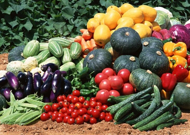 Отличный вариант наполнение теплицы - это выращивание зелени