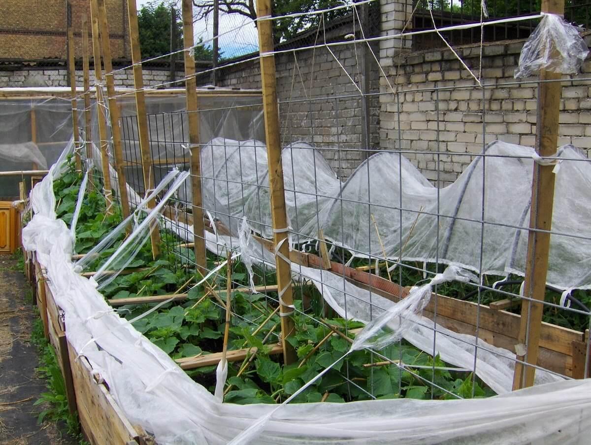 Вертикальные грядки для огурцов — просто и доступно