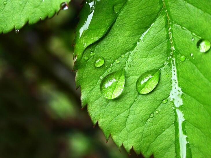 Садоводы часто опрыскивают препаратом клумбы