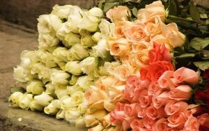 Приобретать розы можно заранее