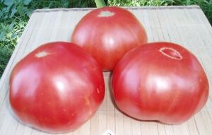 Семена цифомандры на рассаду высаживаются гораздо раньше, чем для традиционных томатов