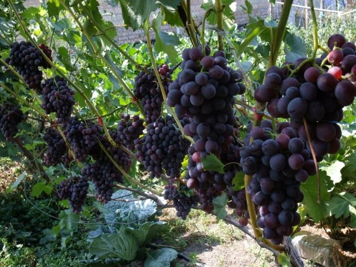 В плодах этого растения содержится большое количество различных витаминов