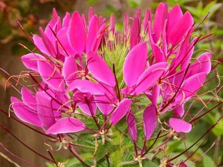 Внешний вид цветка достаточно экзотичен