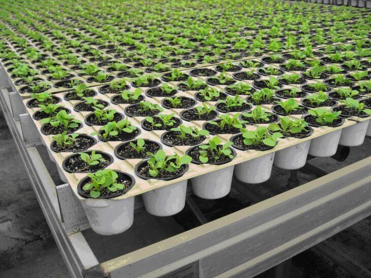 Зеленные культуры выращиваются в условиях искусственного климата