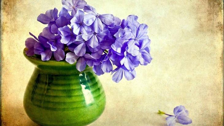 Пышные шапки соцветий флоксов нельзя спутать, не с какими, другими цветами