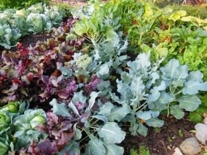 Хорошо сочетаются между собой овощи с ранним и поздним сроком созревания