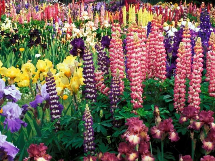 Посадка цветов на даче ˗ ответственное дело