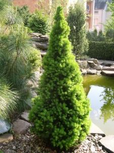 Маленький размер елочки позволяет размещать растение в любом месте
