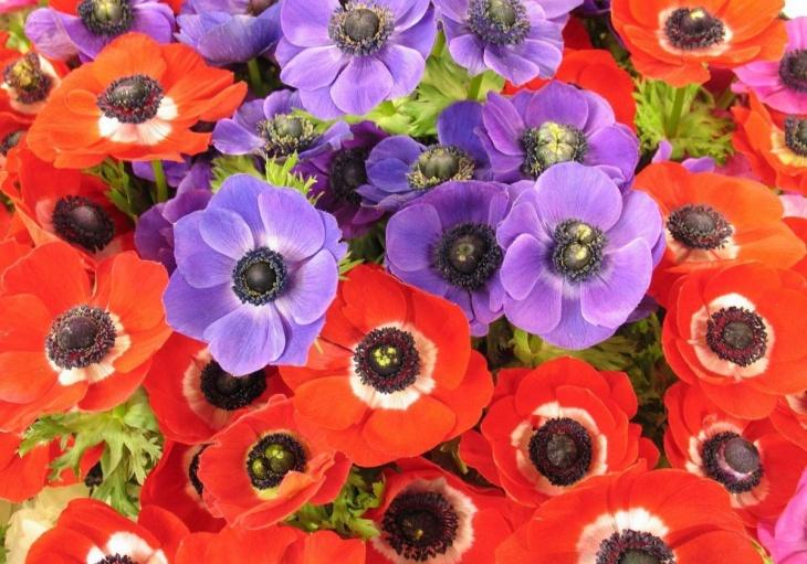 Соблюдения основных правил оформления своей клумбы обеспечивают её долгое и благополучное цветение, которое выгодно украсит вашу дачу