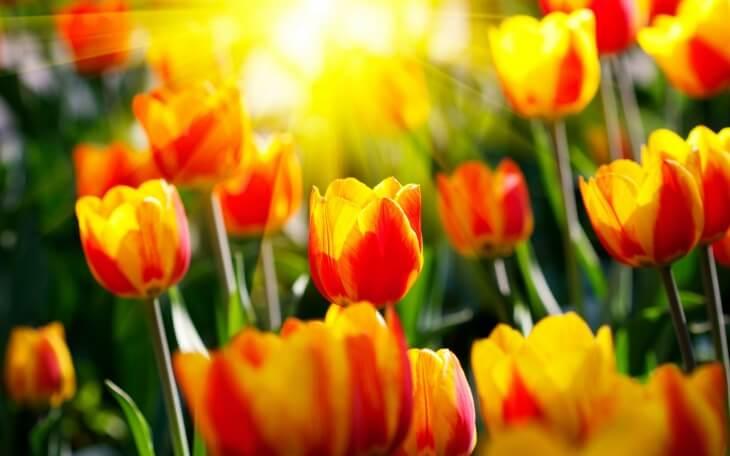 Для того чтобы растения в конечном итоге были полноценными нужно вовремя срезать цветы