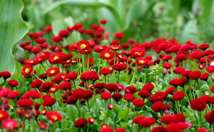 Растения на хорошей почве