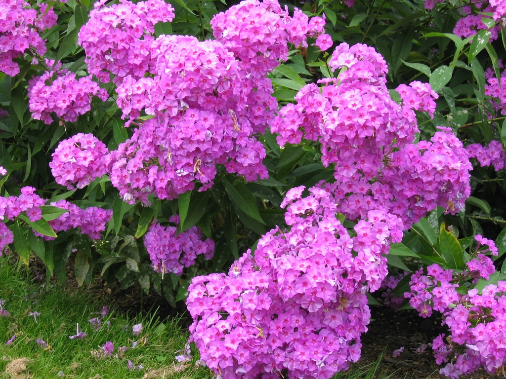 Как добиться красивой посадки цветов на даче — советы и рекомендации