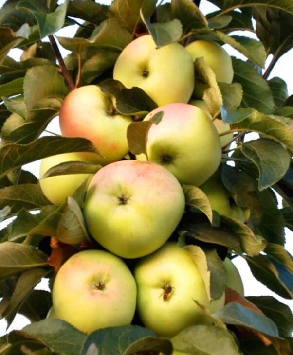 Фото плодов