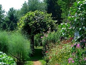 Весной, когда всё пробуждается, и в саду ещё очень мало зелени, каждый лепесточек или стебелёк привлекает к себе внимание