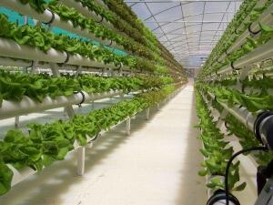 Один из видов установки для выращивания зелени