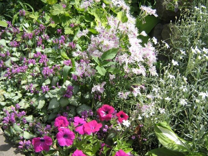Цветы, которым подходит рассеянная тень