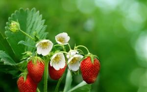 Семена высевают в деревянные ящики, пластиковые стаканчики или торфяные таблетки
