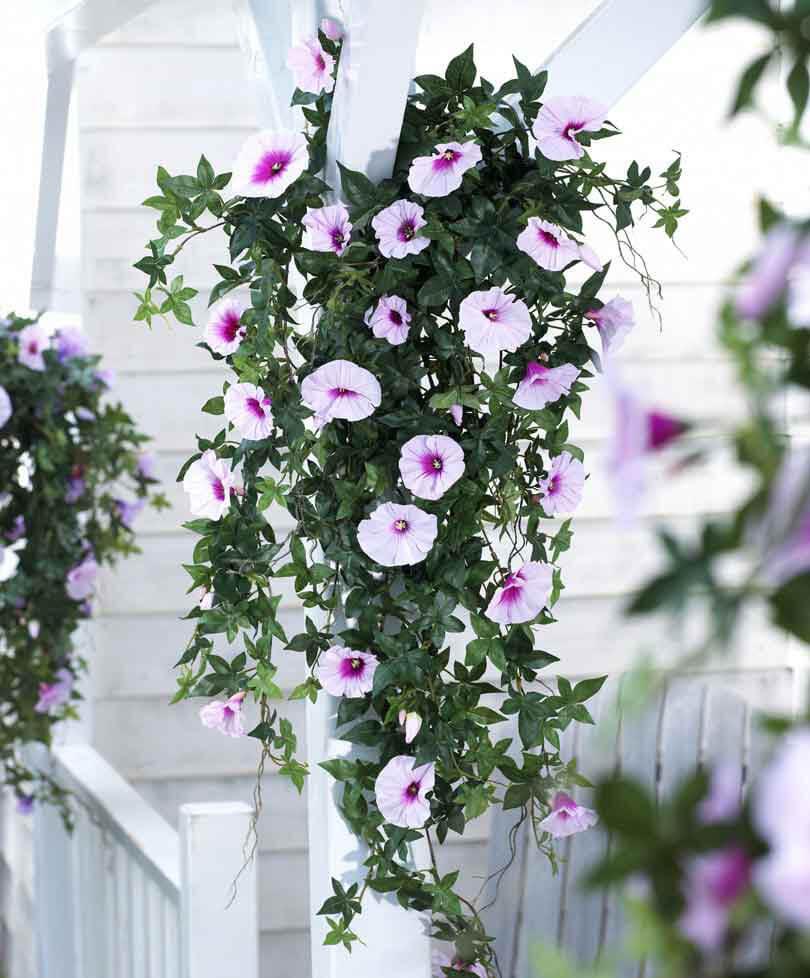 Правильная посадка и уход за растением ампельная петуния — яркие краски в любом уголке сада