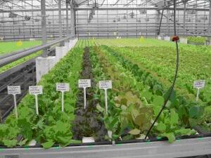 Выращивание зелени из семян
