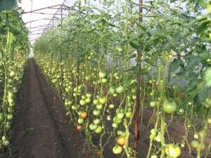 Выращивание гибридов