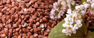 Готовые семена гречихи