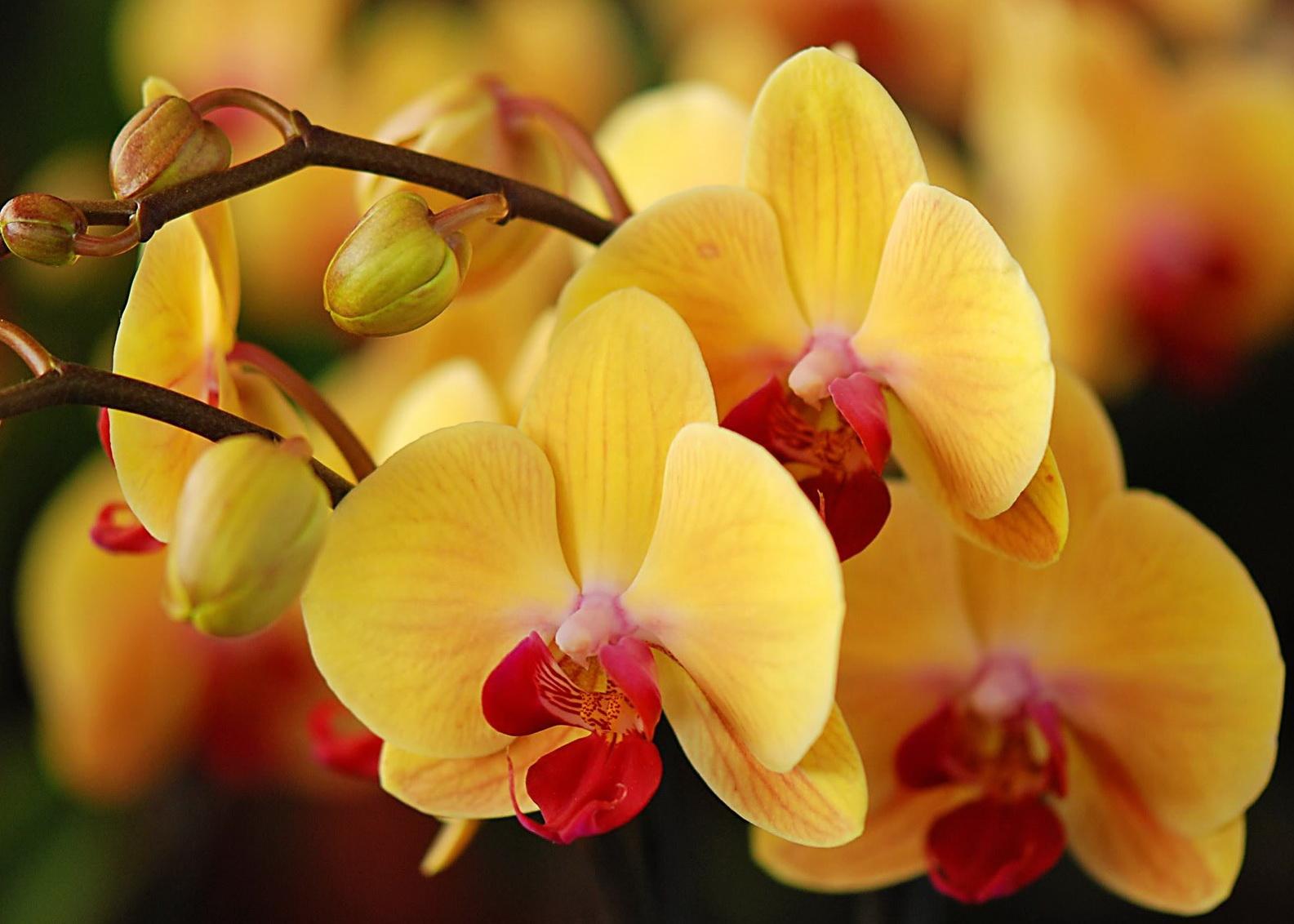 Компоненты, входящие в состав грунта для пересадки орхидей