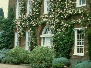 Один из видов украшения дачного домика вьющимся цветком