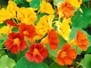 Климатические условия. Садовые цветы