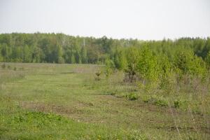Поле для зерновых культур