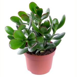 Здоровое растение