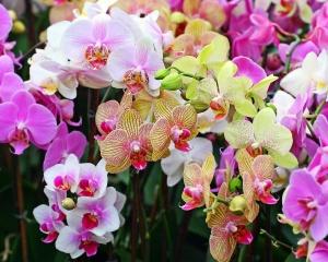 Разнообразные сорта орхидеи