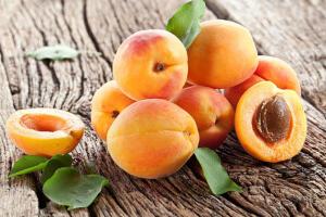 Урожай абрикоса
