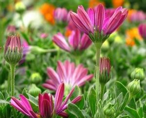 Цветущие растения для сада