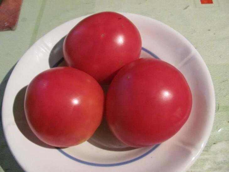Плоды томатов Бычий лоб
