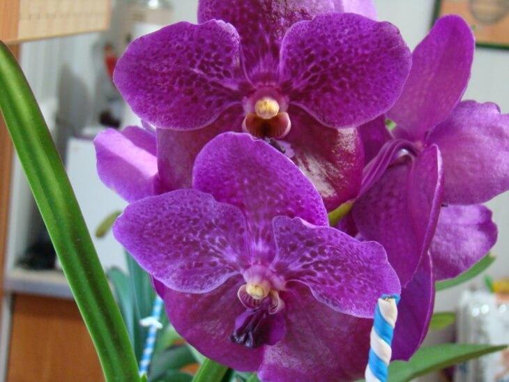 Украшение дома орхидеей
