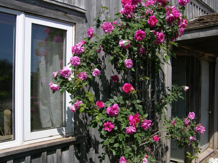 Украшение дома розой