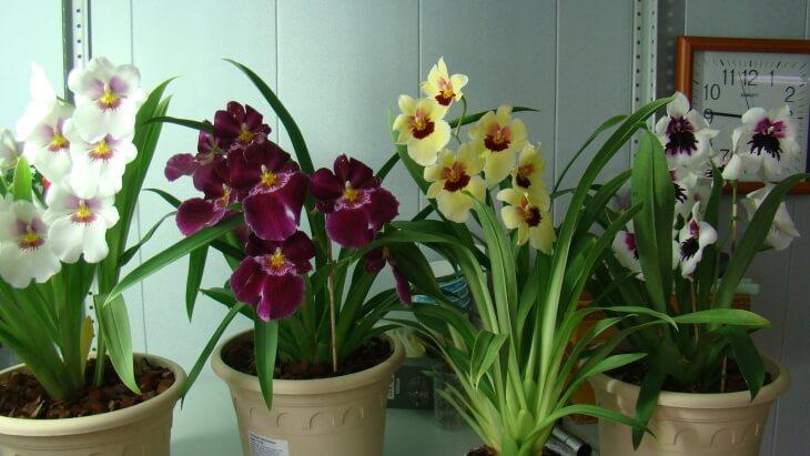 Правильное освещение для орхидей