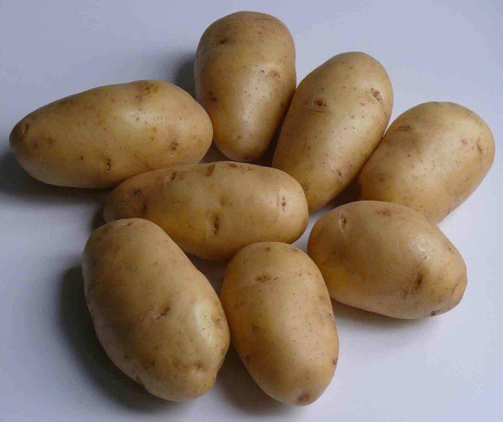 Как вырастить крупный картофель: посадка и уход