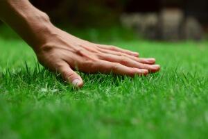 Правильно подстриженный газон