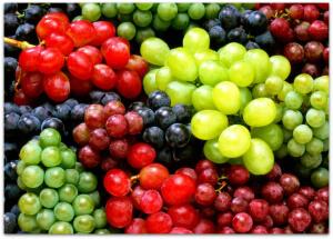 Виноград Ландыш и другие сорта