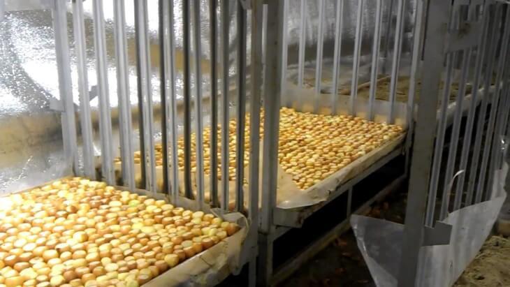 Подготовка лука