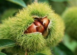 Созревший плод