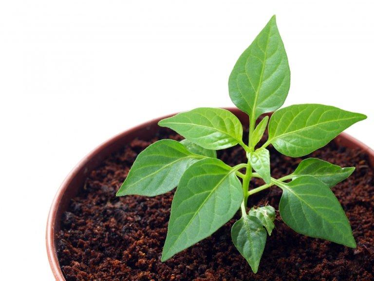 чем полить семена чтобы быстрее проросли